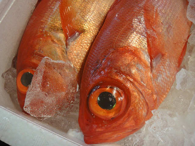 魚の目は栄養があるの!?多く含んでる魚って何?