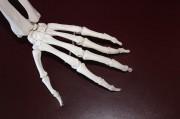 skeleton-778069_640