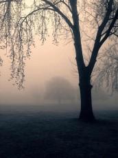 trees-448554_640