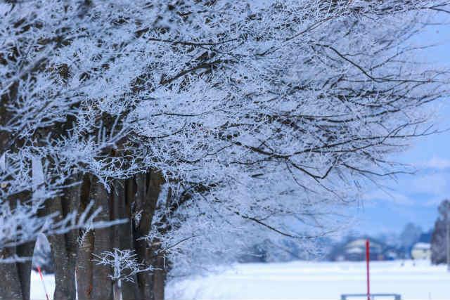 冬といえば食べ物ランキングベスト7をまとめて紹介!
