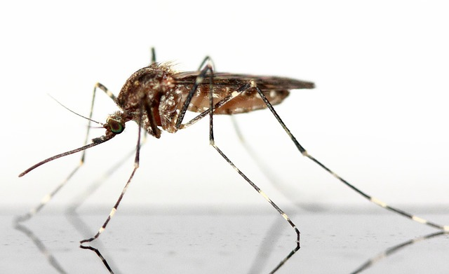 蚊の種類!白黒タイプはかゆみが強いの!?