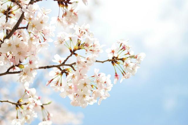 春といえば連想するのは何?7つまとめ!意外なアレも…